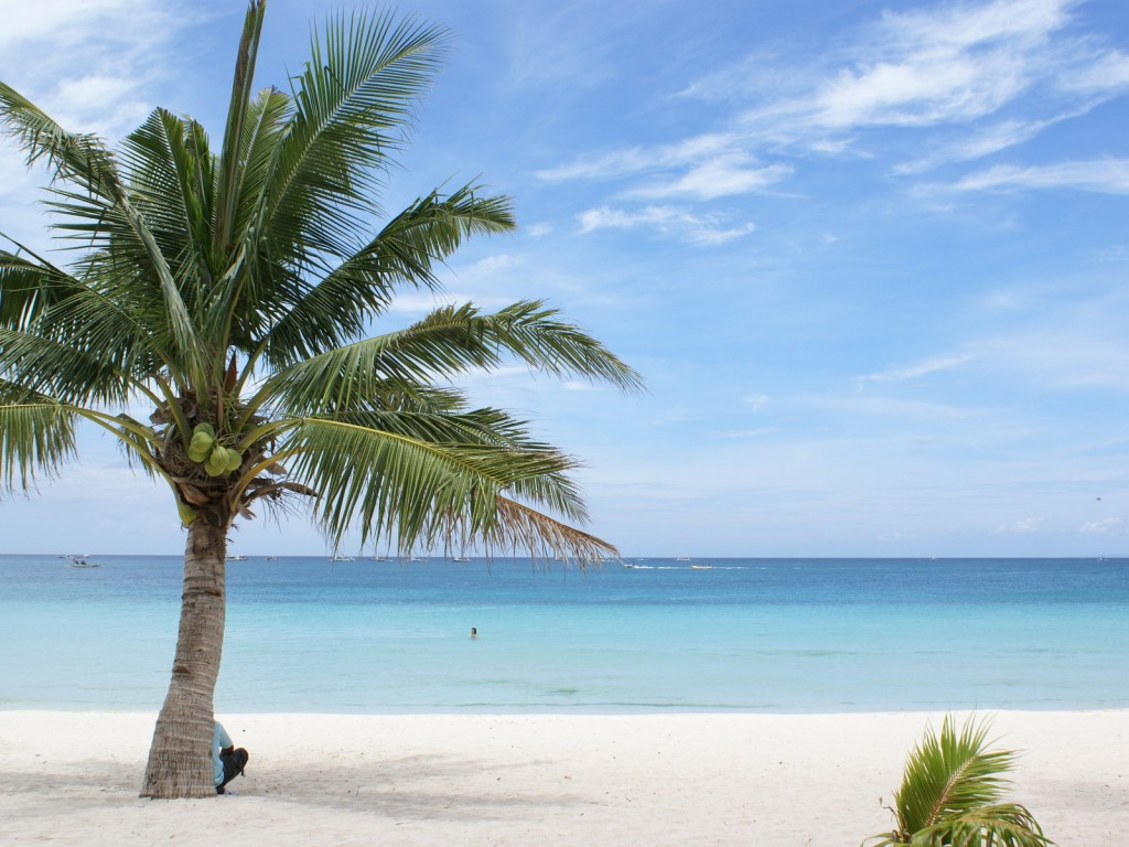 vacation-palm-tree-beach