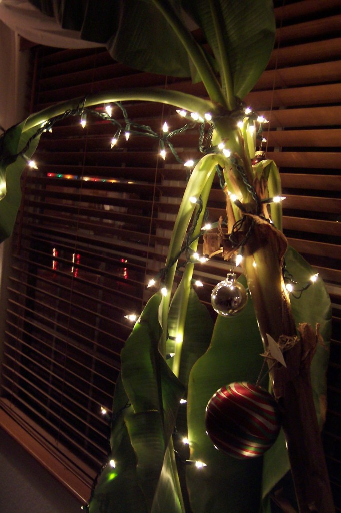 christmas-tree-banana - 10 Weird Christmas Traditions From Around The World €� Cammy