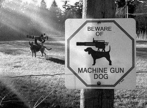 machine-gun-dog