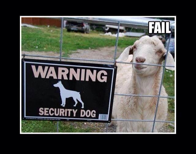 security-goat