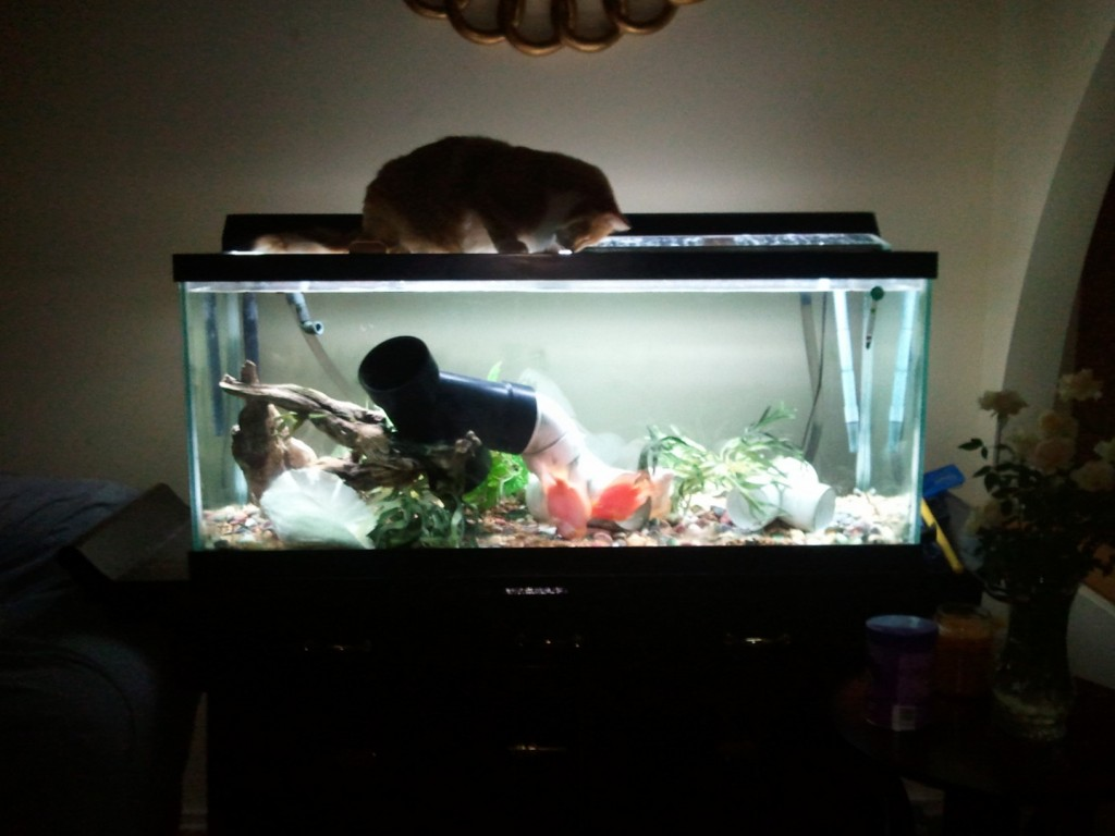 cat-fishtank