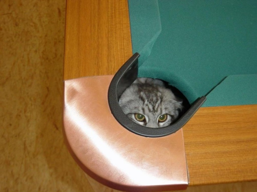 cat-pool-table