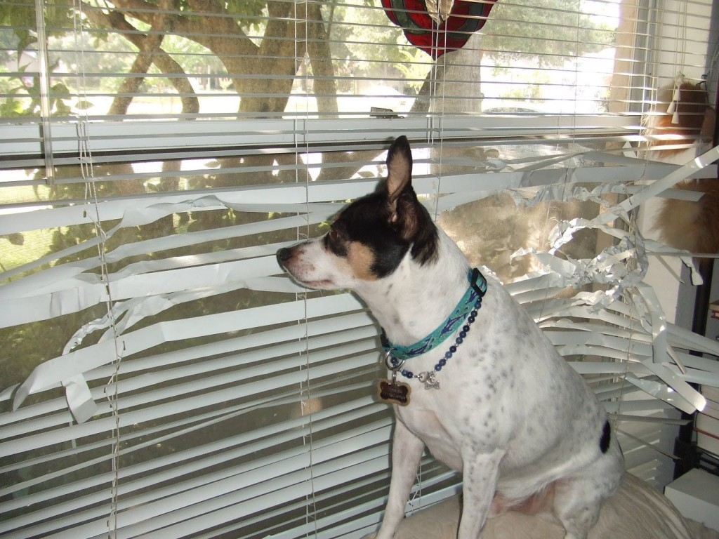 dog-tearing-up-blinds
