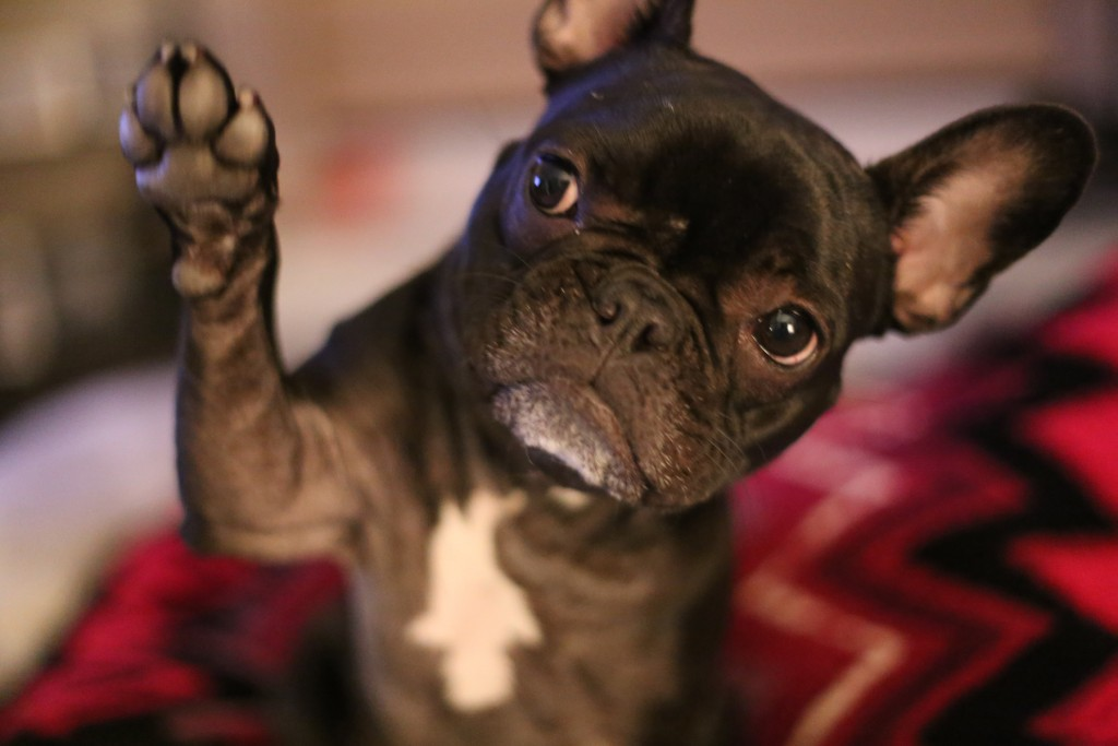 dog-high-five