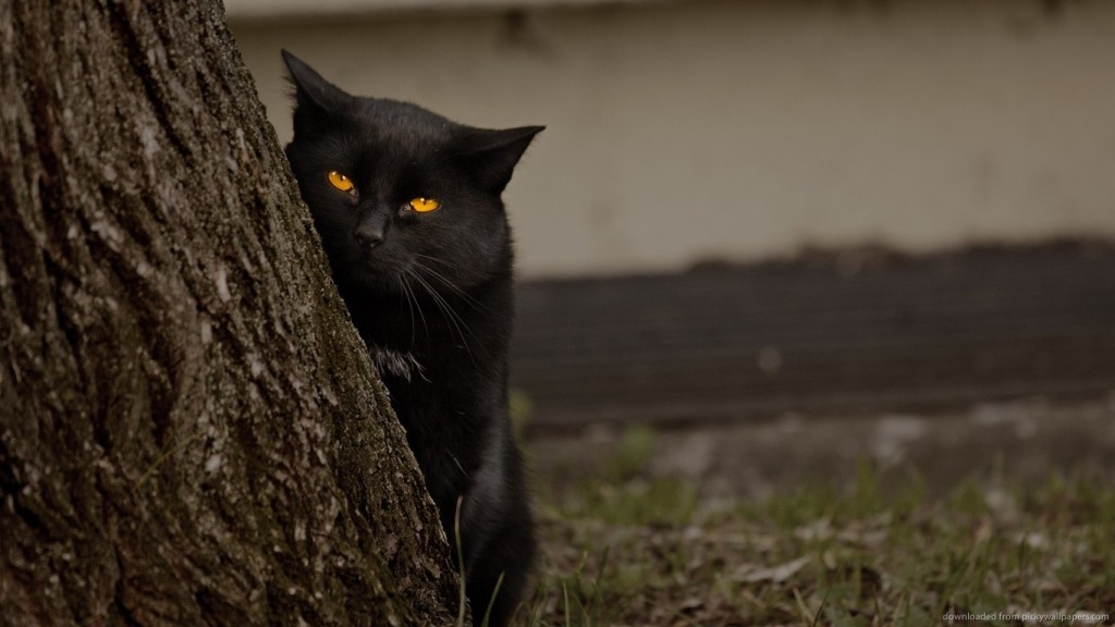 suspicious-black-cat