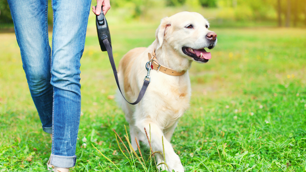 Superb This Is How To Choose A Dog Walker